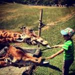 Teo dando de comer a las jirafas en Cabárceno, Cantabria