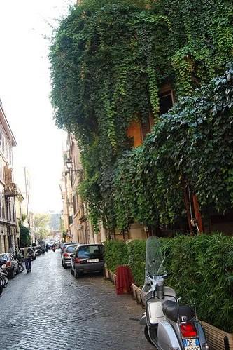 Vegetación en el Trastevere