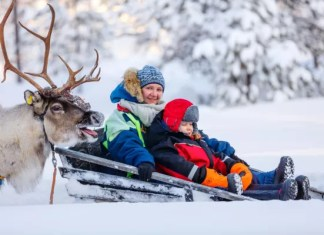 Viaje a Laponia Finlandesa con ninos, trineo con reno