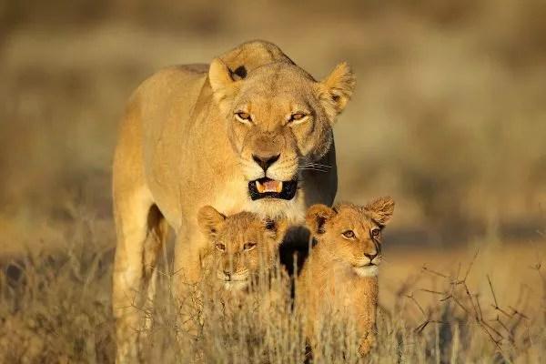Viajes a Sudáfrica, Parque Kruger