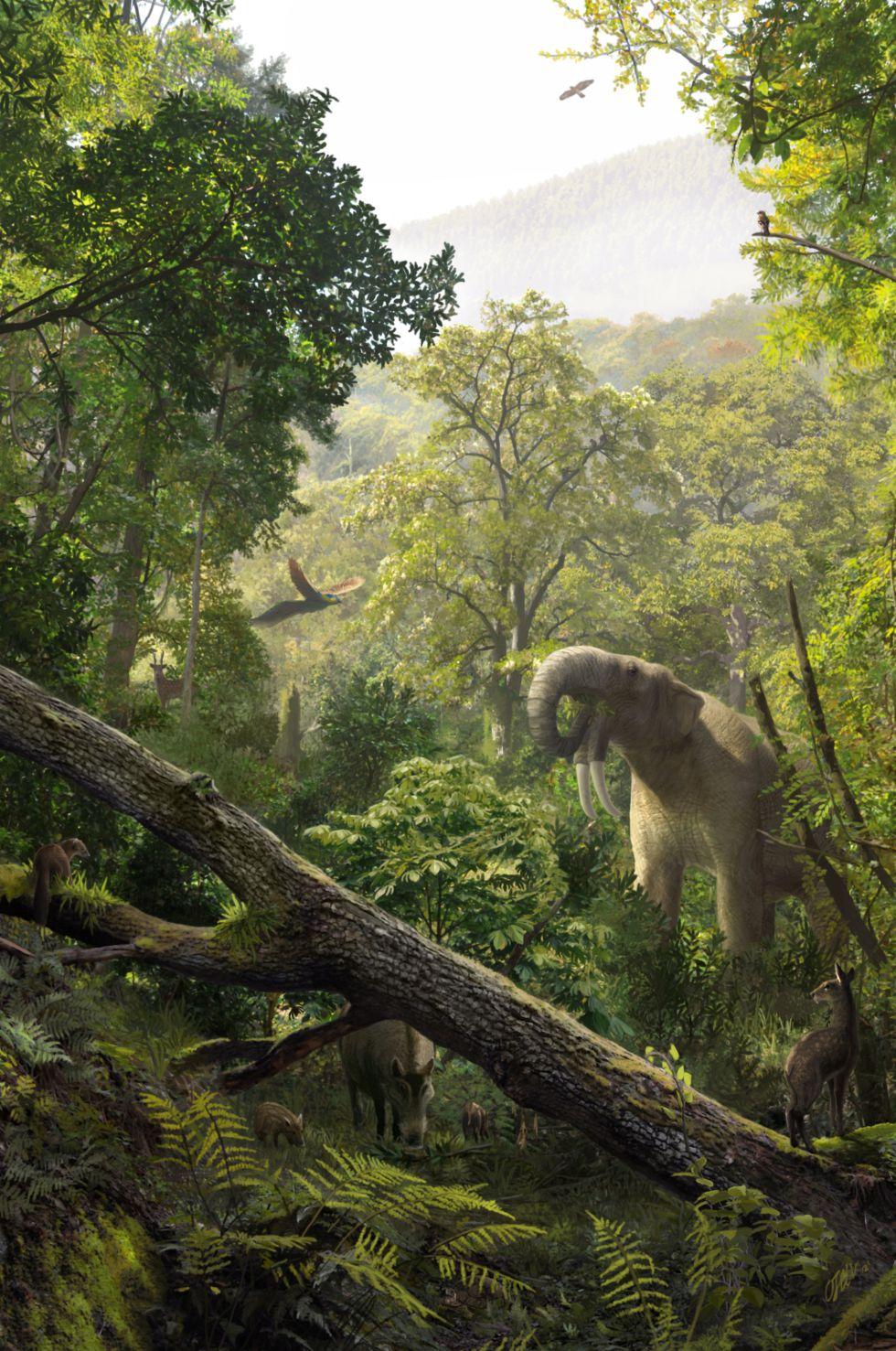 Reconstrucción del ambiente en el que vivió Laia hace 11,6 millones de años