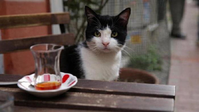 Gatos de Estambul El Palomitrón