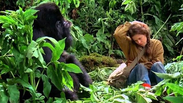 Cine-medio-ambiente-El-palomitron-gorilas-niebla