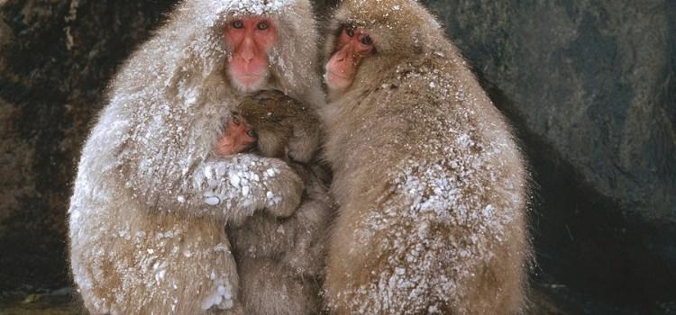 Actitud Positiva, nota compartida: El centésimo mono.