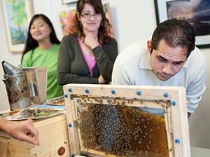 Habitantes de Whittier observan de cerca una colonia de abejas.