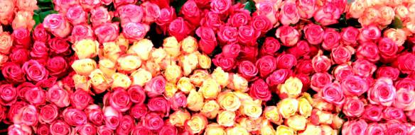 Rosas. Foto: The Original Los Angeles Flower  Market.