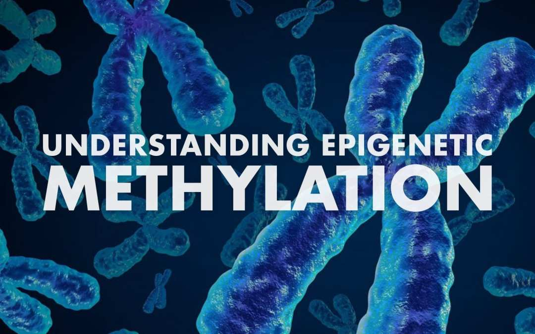 Understanding Epigenetic Methylation