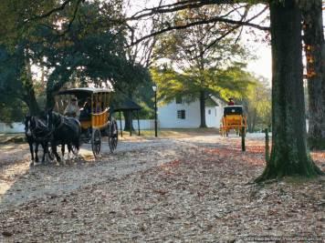 coches de caballos para turistas