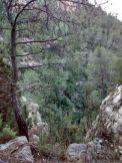Hasta hay árboles secos