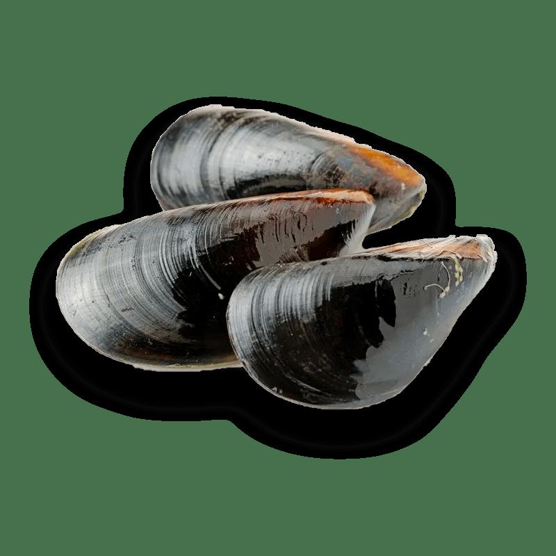 el pescador barcelona Mejillón gallego selecto
