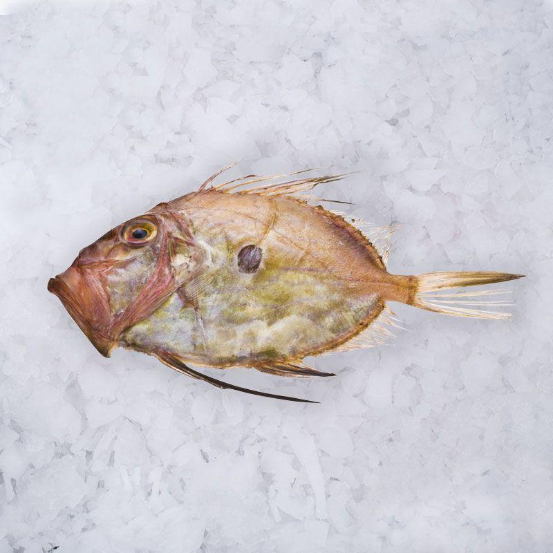 el pescador home tienda online pescado 2 2