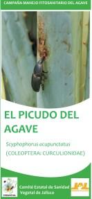 Folleto informativo picudo del agave
