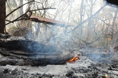 Gran parte de la flora de Los Besotes, fue afectada por las llamas.