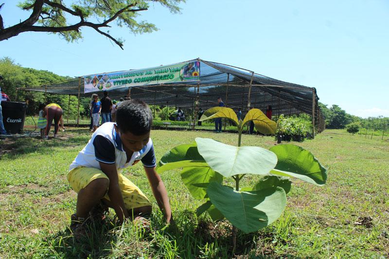 Con siembra masiva conmemorarán Día Mundial del Árbol