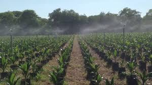 La palma es el sector beneficiado con el proyecto aprobado por Colciencias.