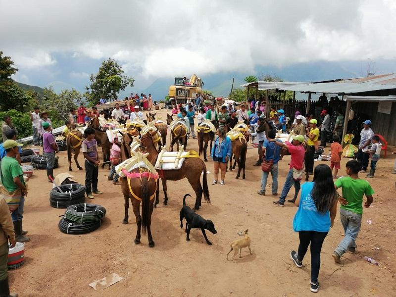La entidad entregó 45 mulos a estas familias para mejorar el desplazamiento de las mismas.   CORTESÍA