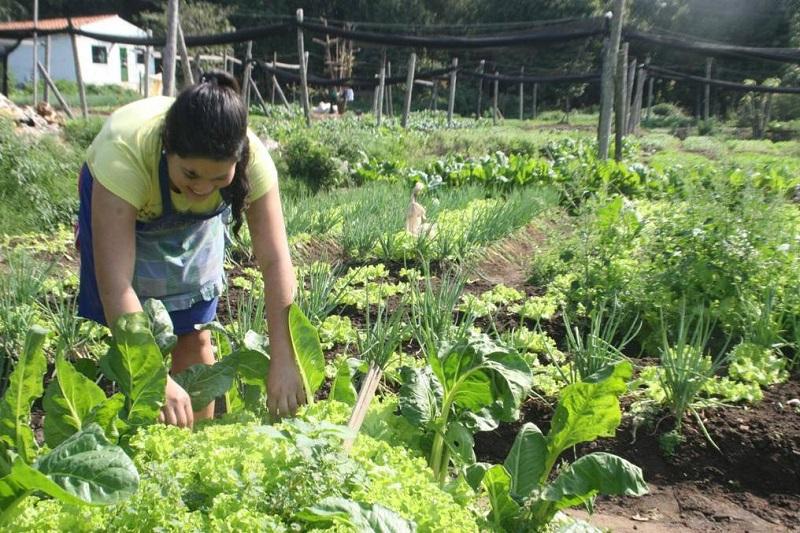 Cultivos de maíz, ají, frijol, entre otros alimentos, se implementarán en las huertas comunitarias.   FOTO/CORTESÍA.