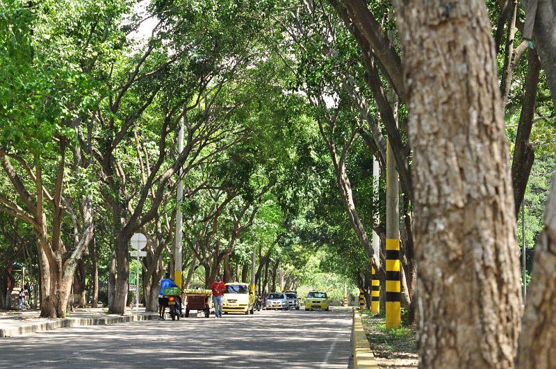 La arborización y las aves son los principales destinos de turismo ecológico de Valledupar.  FOTO: JOAQUÍN RAMÍREZ.