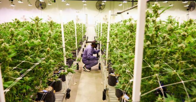 Jay-Z Forma Nueva Mega-Empresa de Cannabis tras un Trato Histórico | El Planteo