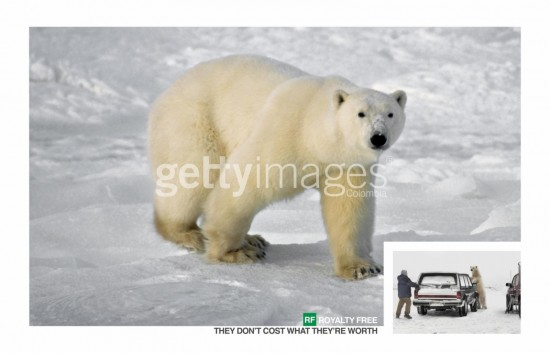 getty images gratis oso