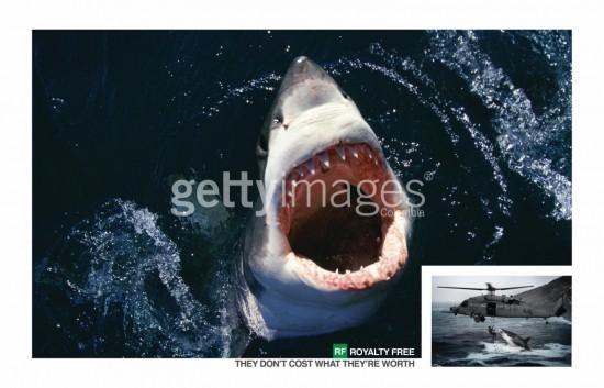 getty images gratis tiburón