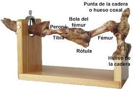 anatomia-del-hueso-del-jamon-El-Portal-del-Chacinado