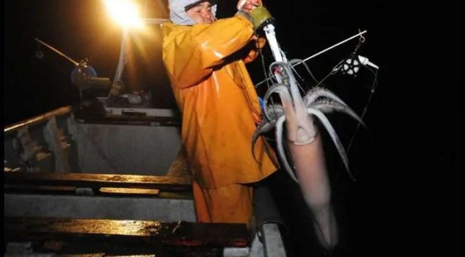 Jibieros denuncian bancada para prorrogar vigencia de la pesca de arrastre