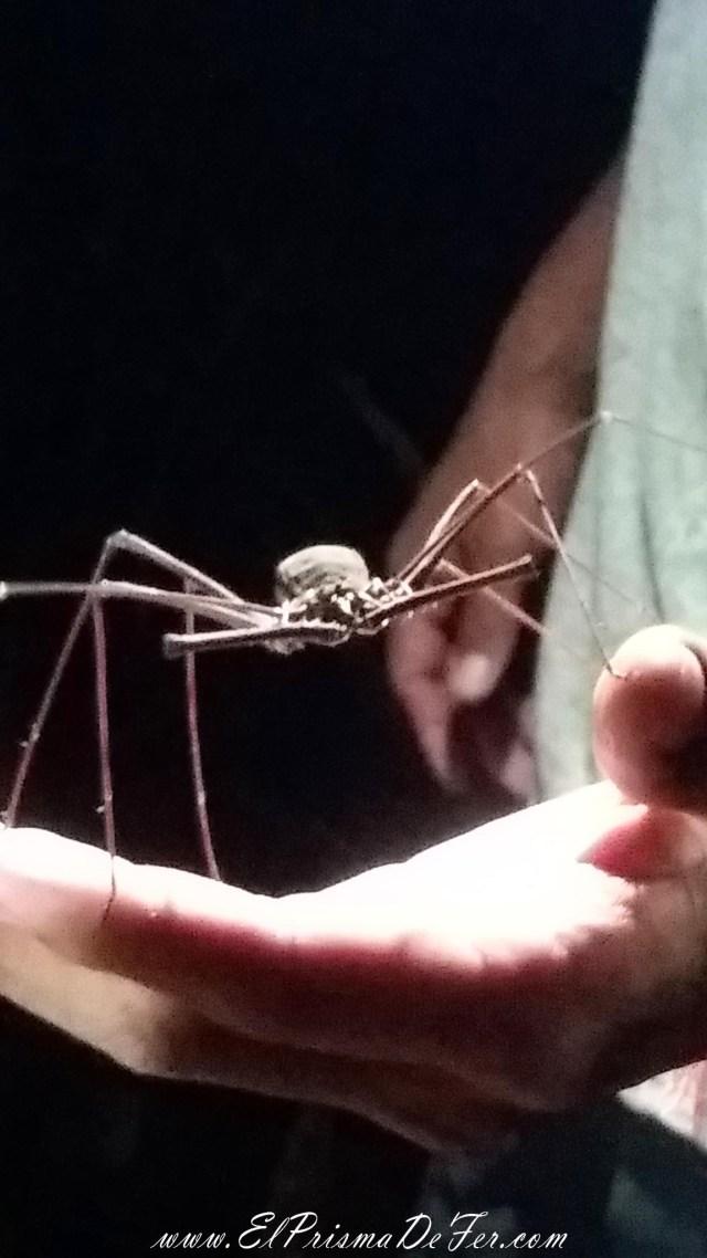 Insectos bastante grandes