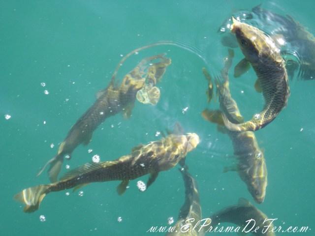 Por estos amiguitos vienen los pescadores