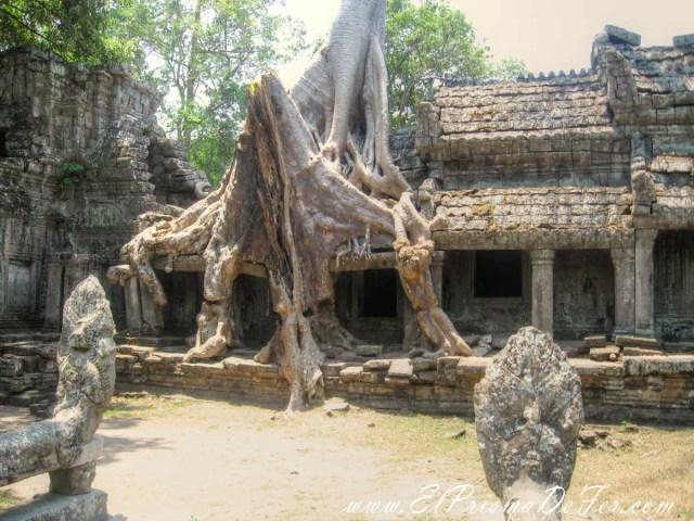 La naturaleza deja su marca en las ruinas de Preah Khan