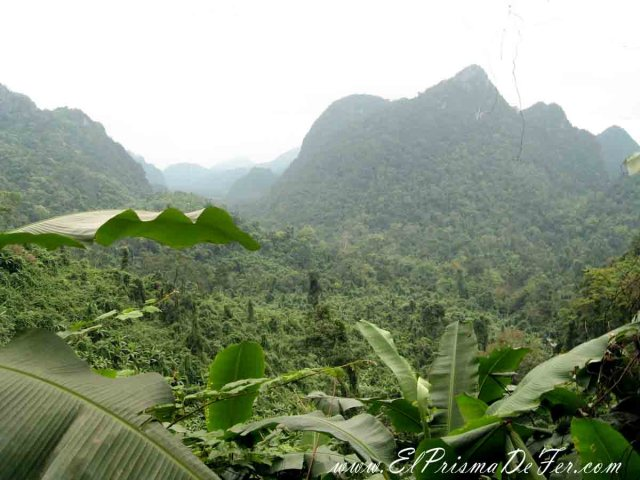 Selva del Parque Nacional Phong Nha-Ke Bang