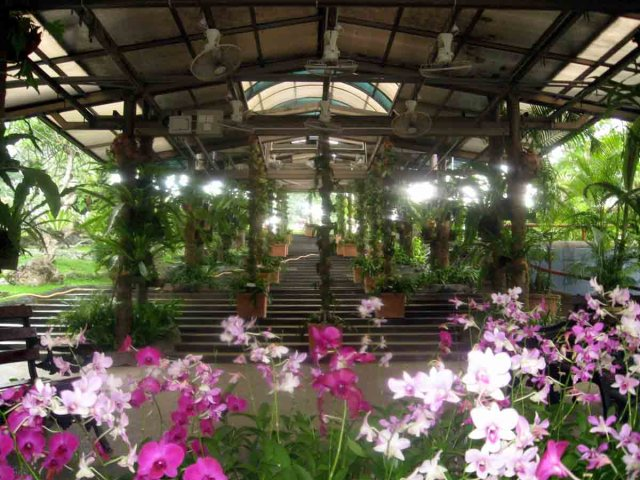 Jardín botanico dentro de Lake Gardens