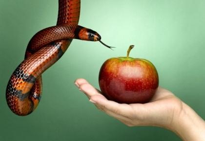 Pecado, Tentación de Satanás, La Serpiente, Cuando un Miembro de la Iglesia Peca