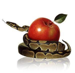 pecado, reflexión, serpiente, manzana