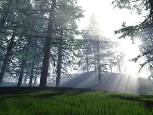 luz, resplandor, estudio