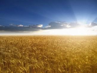 sol, campo, justicia, cielo