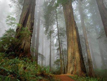 bosque, los tres arboles, reflexión, arboles
