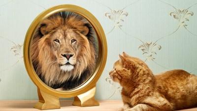 autoengano, leon, gato, espejo, reflejo