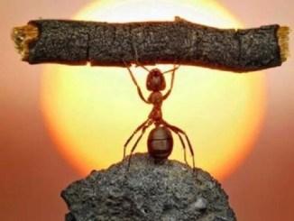 motivacion, psicologia, estudio, hormiga levantando palo