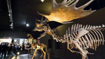 Exposiciones Interiores de Dinopolis