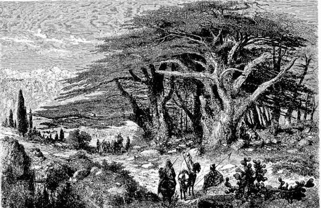Ilustración de Bosque de Cedros del Líbano ( bibliotecapleyades.net )