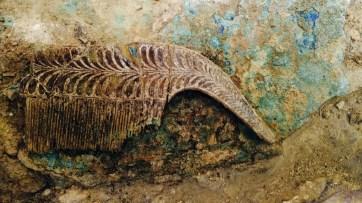 Uno de los seis peines de marfil encontrados en la tumba del guerrero.