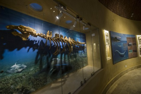whale-fossils-museum