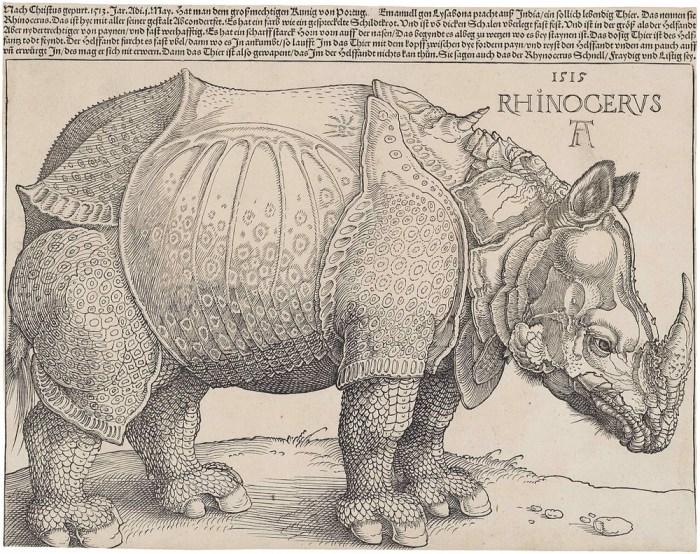 Durero rinoceronte