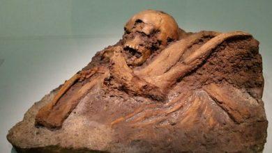 neandertales homo sapiens