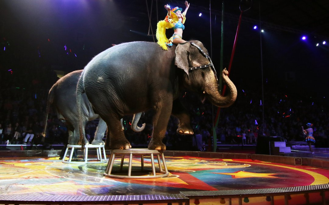 El Riad Shrine Circus History