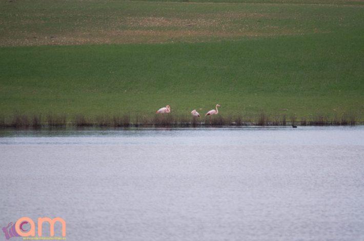 Laguna del Mojón Blanco-45