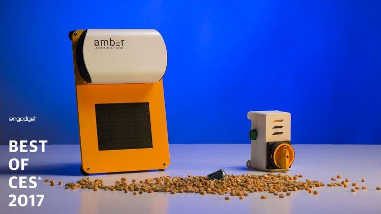 amber-startup