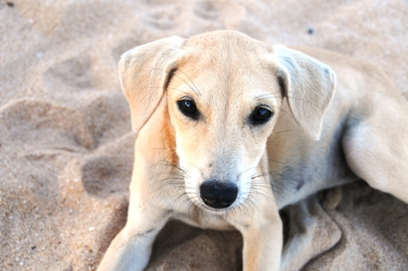 My puppy. She was so cute... waited for me at sunset by the beach gate to play and in the mornings to come with me on picture walks... She liked playing so much that I ended up with a scratch in my hand and a couple of rabies vaccinations!