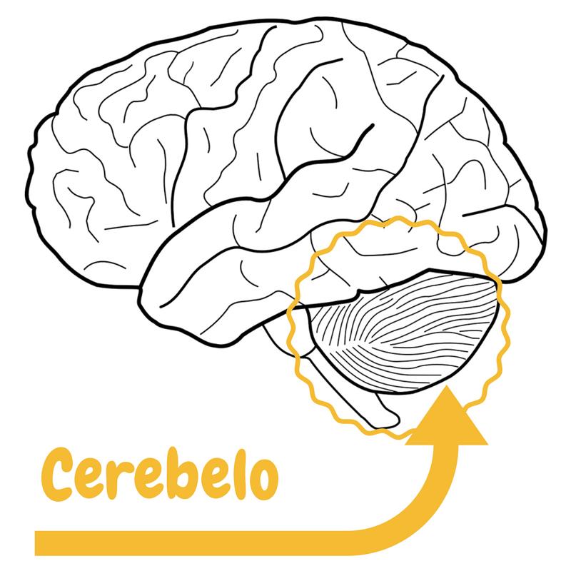 Síndrome Cerebeloso | Síntomas,diagnóstico y tratamiento.